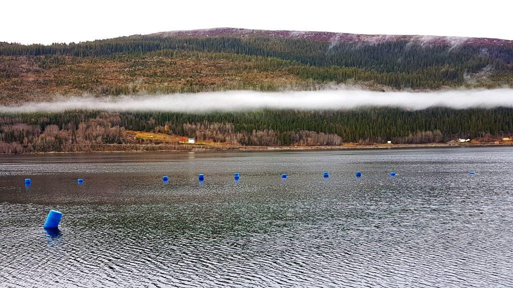 Blåskjellteiner i Beistadfjorden i Framverran i Inderøy Foto Visit Innherred